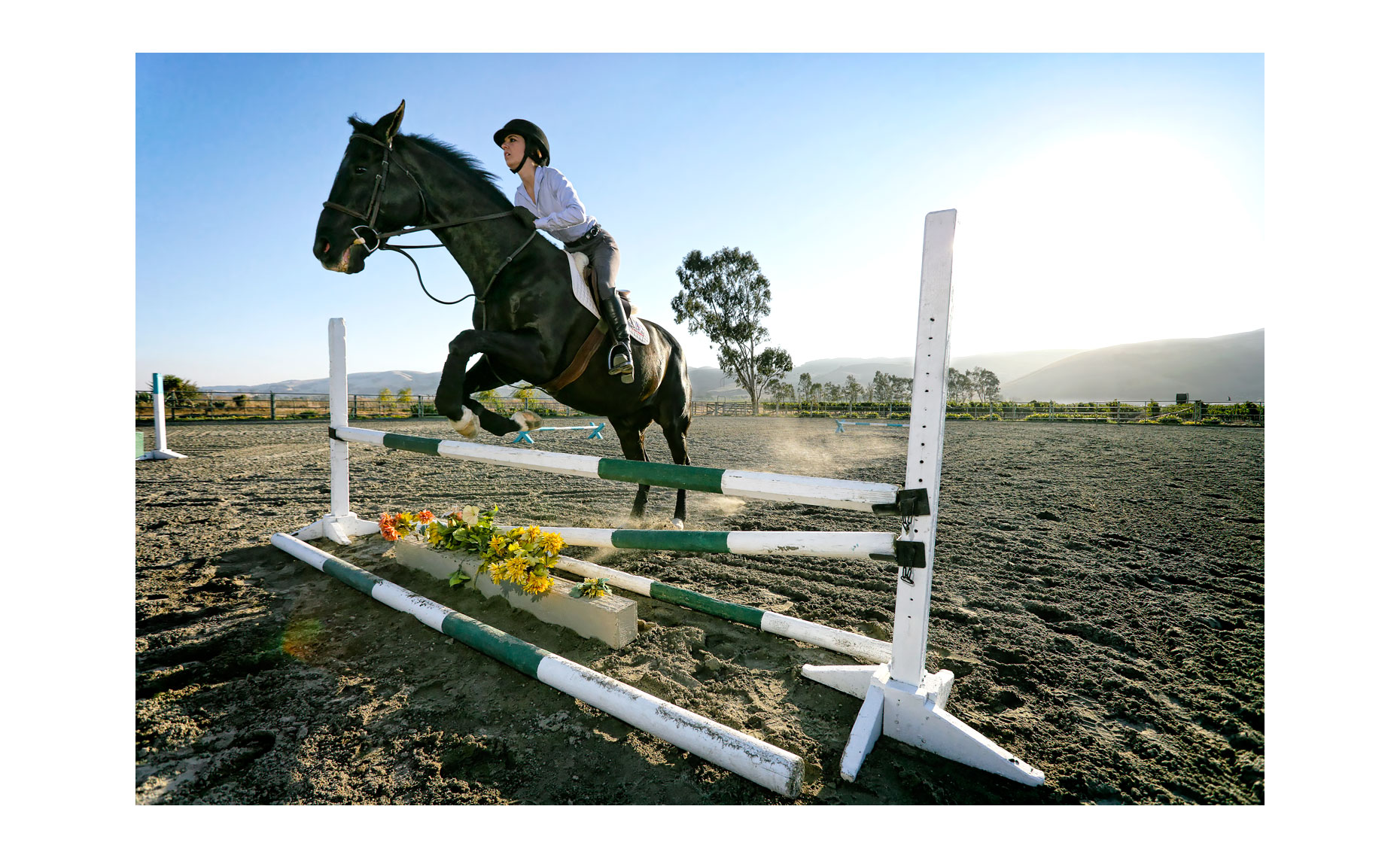 Show Jumping | NFP Car Photo